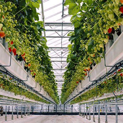 مطالعات آزمایش، استعدادیابی، ایجاد و توسعه شهرکهای کشاورزی (گلخانهای) در استان زنجان