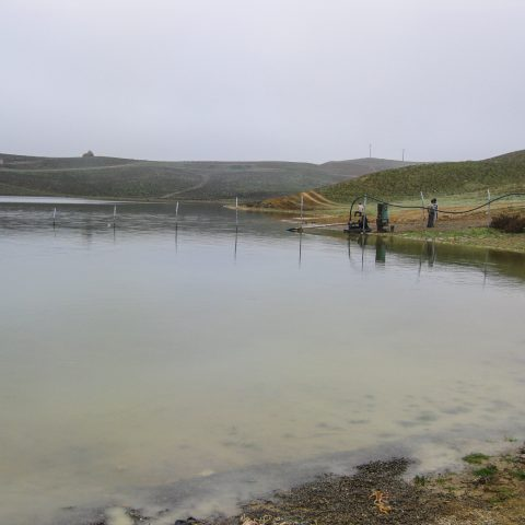 Feasibility study of aquaculture in irrigation and drainage network of Arasbaran Dam