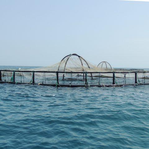 مطالعه اثرات زیست محیطی پرورش ماهی قزل آلا و سایر گونههای دریای خزر استان مازندران